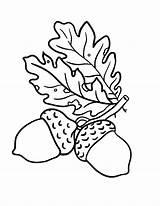 Acorn Oak Coloring Leaves Leaf Drawing Template Acorns Printable Coloringsky Getdrawings Templates Sky Scrat Sketch Getcolorings sketch template