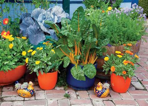 Wise Pairings Best Flowers To Plant With Vegetables