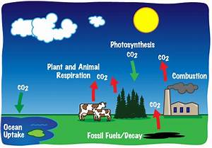 What is carbon dioxide? Greenhouse gases - Market Business ...
