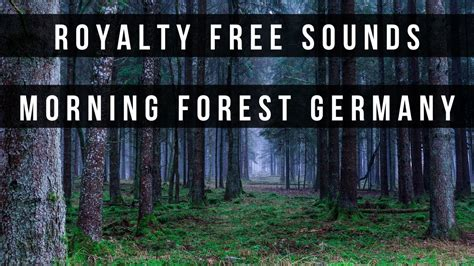 morning forest sounds effects germany bird