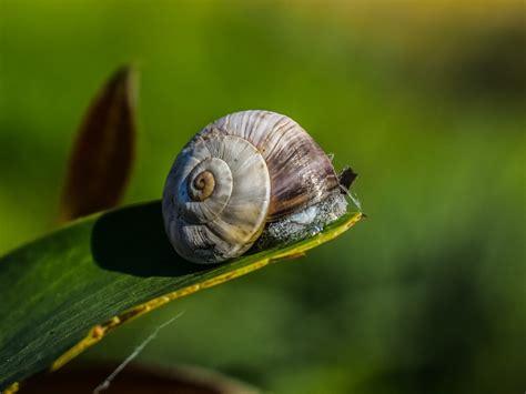 47 Koleksi Gambar Hewan Invertebrata Siput Terbaru ...