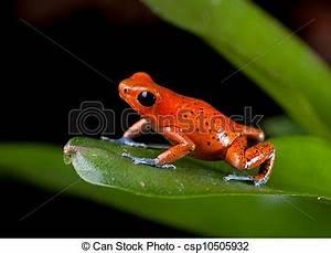 Frosch Als Haustier : stock fotos von rotes gift wurfpfeil frosch costa rica frosch csp10505932 suchen ~ Buech-reservation.com Haus und Dekorationen