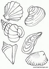 Coloring Shells Pages Seashells Printable Template Templates Starfish sketch template