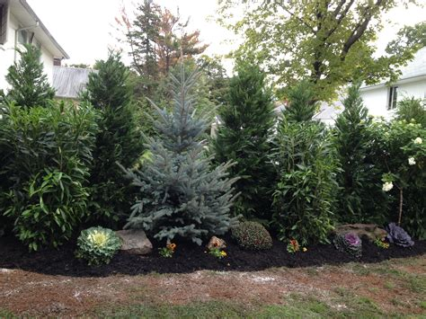 landscape for privacy landscaping evergreen trees for privacy best privacy landscaping ideas on best backyard