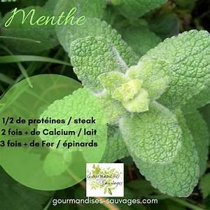 Variété De Menthe : les incroyables nutriments de la menthe ~ Melissatoandfro.com Idées de Décoration