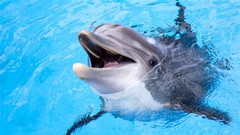 false facts  dolphins   believed