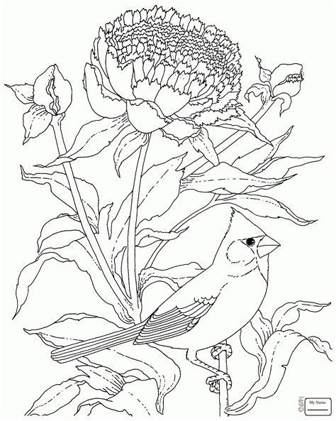 Cherokee Rose Drawing At Getdrawingscom Free For