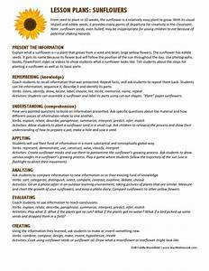 Lesson Plans Sunflowers By Teach Kids To Cook