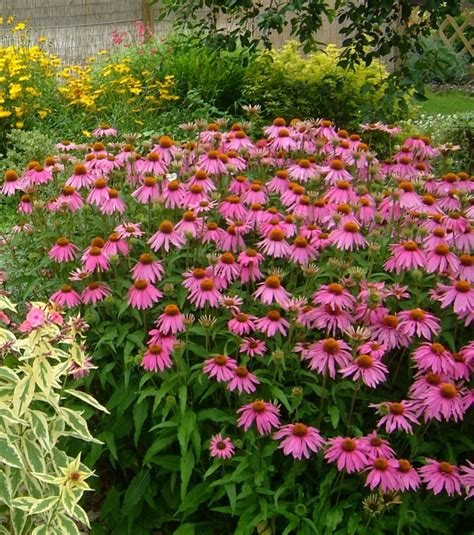drought resistant flowers drought tolerant plants save time and water your easy garden