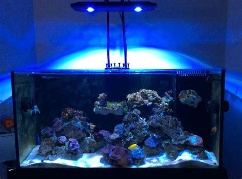kessil ap700 led aquarium light review