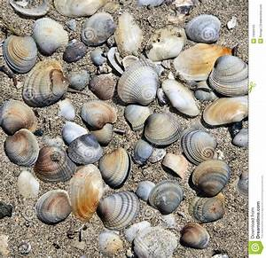 Background Of Sea Shells Stock Photos - Image: 19569163