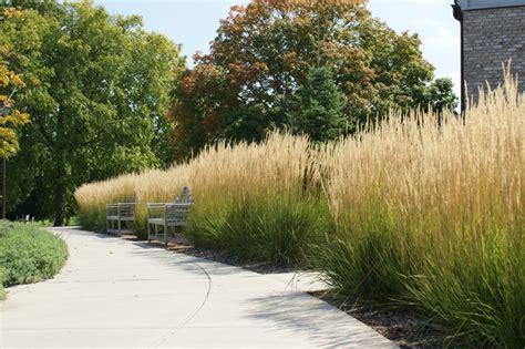 ornamental grass landscape ornamental grass karl foerster ethical landscape consultants llc