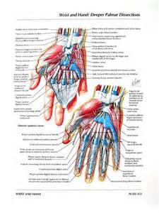 Hand and Wrist Anatomy Tendons
