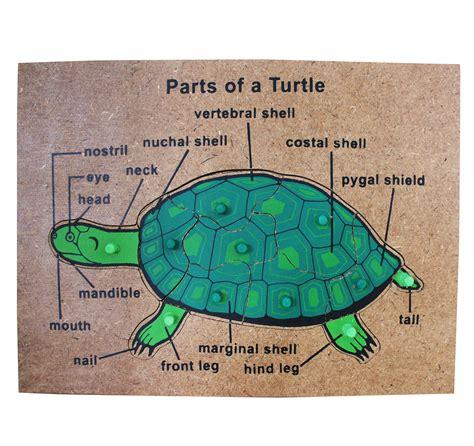 Parts Of Animals And Plants Puzzles  Tahanang Walang Hagdanan