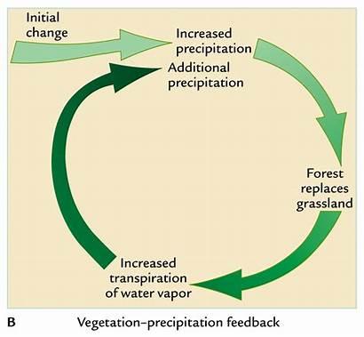Feedbacks Feedback Climate Box Conceptual System Less