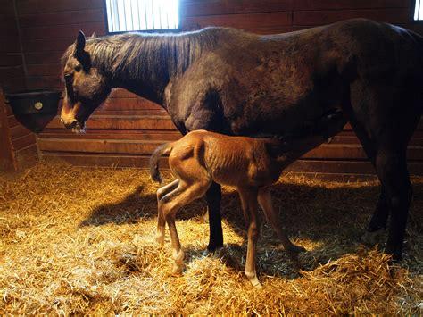 horse born horses newborn caledon inside ontario under