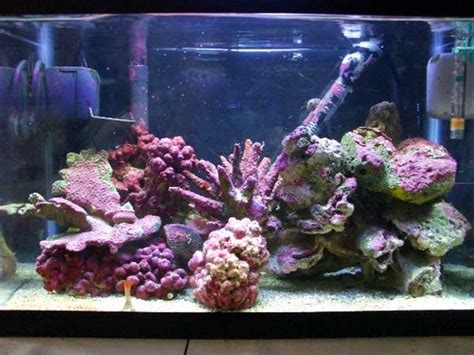 nano saltwater tank setup part 4