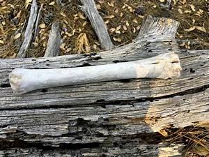 Tronc Bois Flotté : images gratuites bois flott arbre la nature for t branche feuille tronc os souche d ~ Dallasstarsshop.com Idées de Décoration