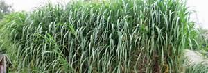 Schöne Pflanzen Für Den Garten : sch ne sichtschutzpflanzen immergr ne und sommergr ne ~ Michelbontemps.com Haus und Dekorationen