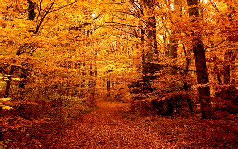 Autumn forest path wallpaper | 1920x1200 | #29043