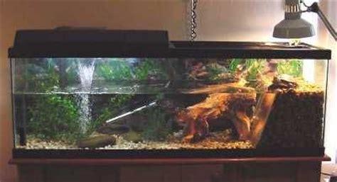 aquatic turtle basking light 17 best images about fish tank ideas on pinterest