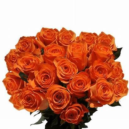 Roses Orange Dozen Flowers Fresh Globalrose Delivery