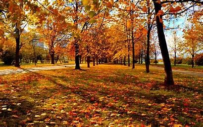 Fall Trees Desktop Wallpapers 4k Leaves