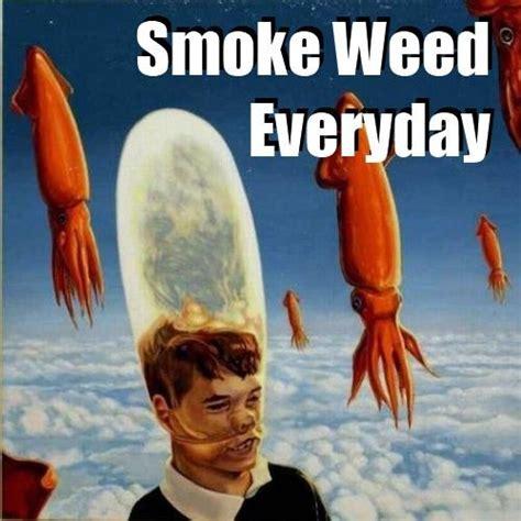 Smoke Weed Everyday Meme - image 288810 smoke weed everyday know your meme