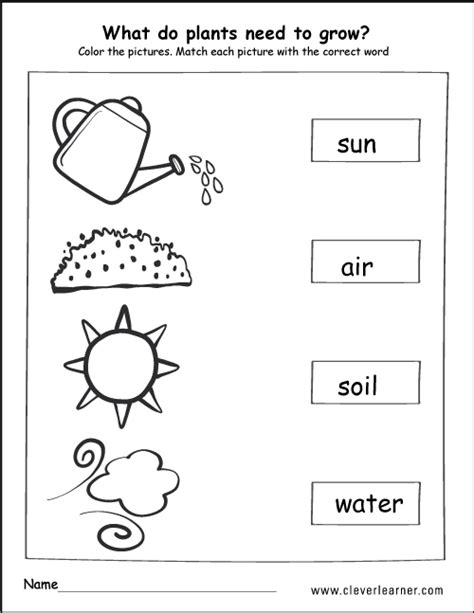 plants worksheets for kindergarten worksheets for all