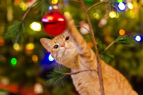 repel cat christmas tree 10 safety tips for cats