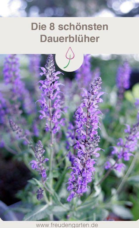 Lange Blühende Pflanzen by Blumen Die Lange Bl 252 Hen