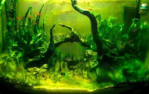 les algues bleues vertes visqueuses