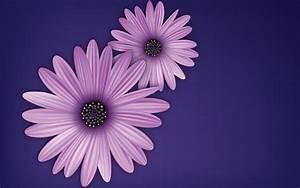 Flowers, Purple, Vector, Digital, Art, Simple, Background, Wallpapers, Hd, Desktop, And, Mobile