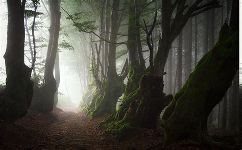 nature landscape mist trees path roots forest moss