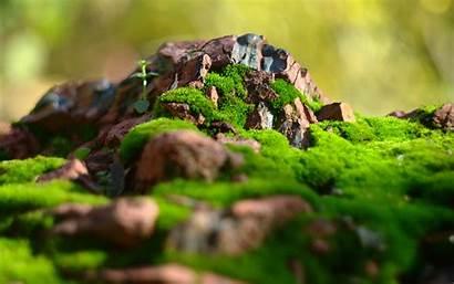 Wallpapers Macro Moss Rocks Desktop Stones Resolution