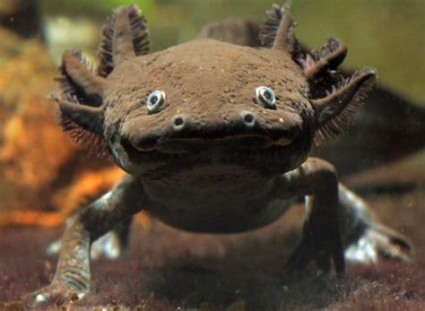 die axolotl app fuer den tierarzt erste hilfe bei roadkill