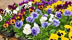 Wie Oft Blumen Gießen : pestizide schweizer blumen sind voll von bienensch dlichen giften ~ Orissabook.com Haus und Dekorationen