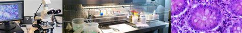 anatomie et cytologie pathologiques centre hospitalier libourne