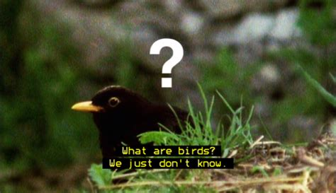 what are birds on tumblr