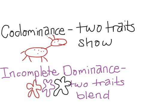 Incomplete Dominance  Science, Biology, Genetics Showme