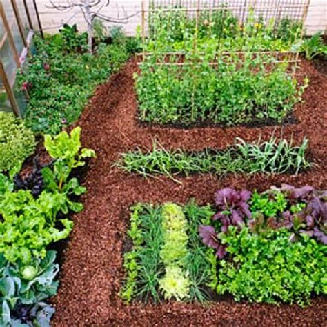 plant  cool season vegetable garden edible garden
