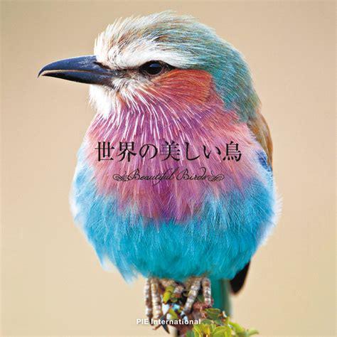 colours ofbeautiful birds   world  chromologist