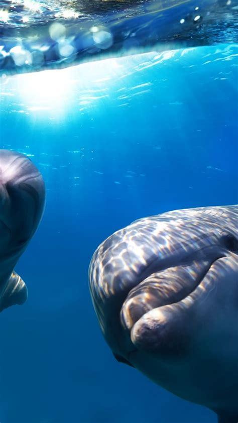 wallpaper dolphin underwater  diving sites animals