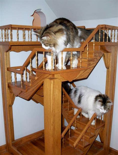 depuis 15 ans il transforme sa maison en terrain de jeu g 233 ant pour chats insolite wamiz