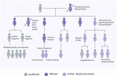 Tree Medical Fabry History Example Families Worksheet