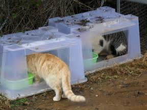 Cat Outdoor Shelters and Feeding Stations
