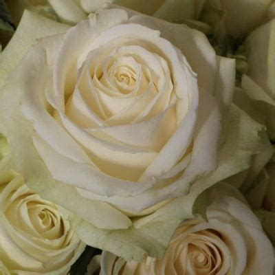 parisian chic  jeff leatham meijer roses