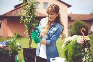 Kletterrosen Richtig Pflanzen : kletterrosen pflanzen von standort bis vermehrung ~ Markanthonyermac.com Haus und Dekorationen