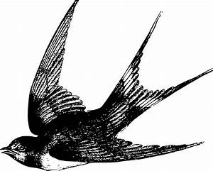 Clipart - Swallow