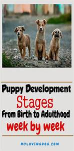 This Guide Will Show You A Puppy Development Stages From